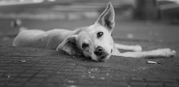 """Fotografia da exposição """"Cachorros"""", que integra a mostra na Matilha Cultural, em São Paulo - Paola Vianna/Divulgação"""