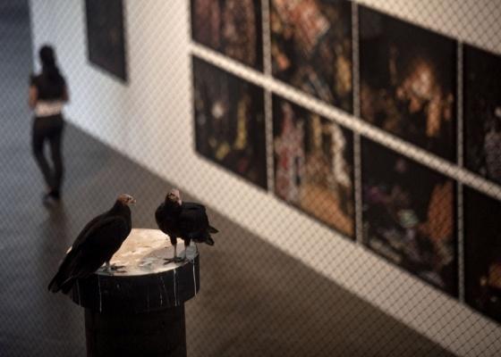 Urubus da obra Bandeira Branca, de Nuno Ramos, no pavilhão da Bienal