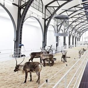 Instalação de arte com renas em uma estação abandonada de trens em Berlim, na Alemanha - David von Becker/Divulgação/BBC