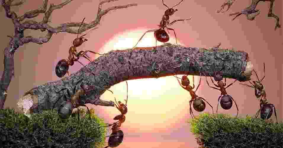 O fotógrafo russo Andrey Pavlov criou cenas de contos de fadas usando formigas como personagens principais - Caters
