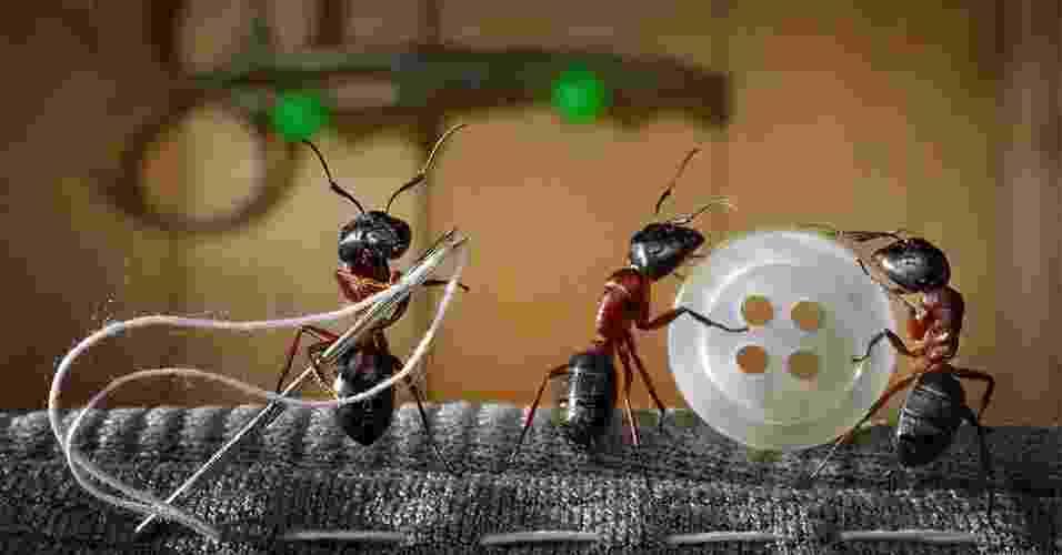 O fotógrafo russo Andrey Pavlov passou horas arrumando os cenários para capturar imagens dos insetos em várias atividades - Caters