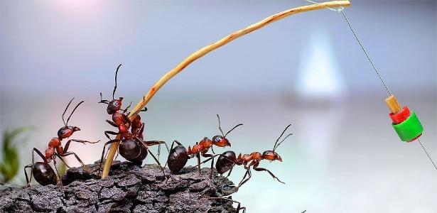 """Pavlov afirma que escolheu formigas como personagens de suas cenas """"pois as respeito e respeito seu modo de vida"""" - Caters"""
